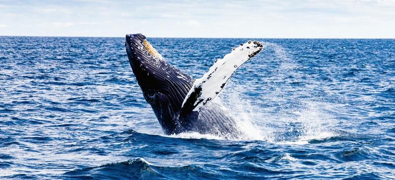Tanec s obry aneb Kam se vydat za velrybí písní